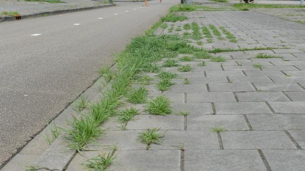 De @gemshertogenbos doet aan #ecologisch #beheer . Mooie groene stoep in #hintham = verkapte #bezuiniging