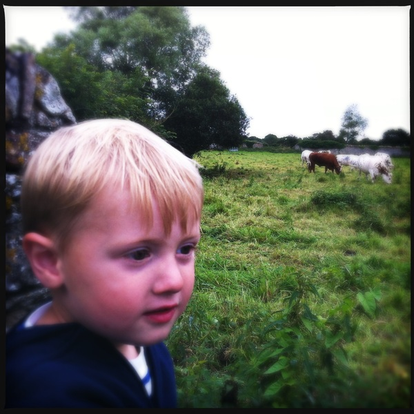 Fletcher of the day: cows