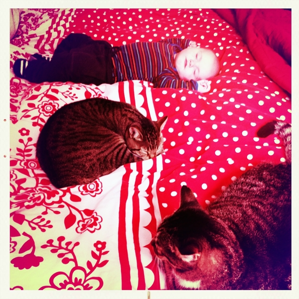 Fletcher of the day: naptime for the kids