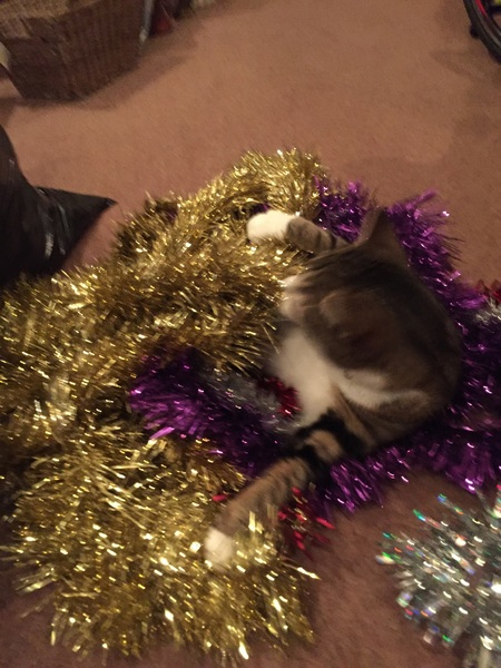 Taking down the Christmas decorations. Hattie the cat is not helping!