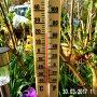 Zomerse Temperaturen in de Lente Op Donderdagmorgen in Beverwijk. #buienradar