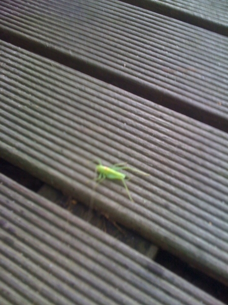 Rather strange. Just found this grasshopper in our house.