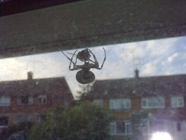 #spiderfight 3/3 Finish him!