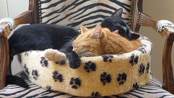 #Liefde is...: twee #katten 1 mand. Lekker warm en knus. Katten schatjes toch?