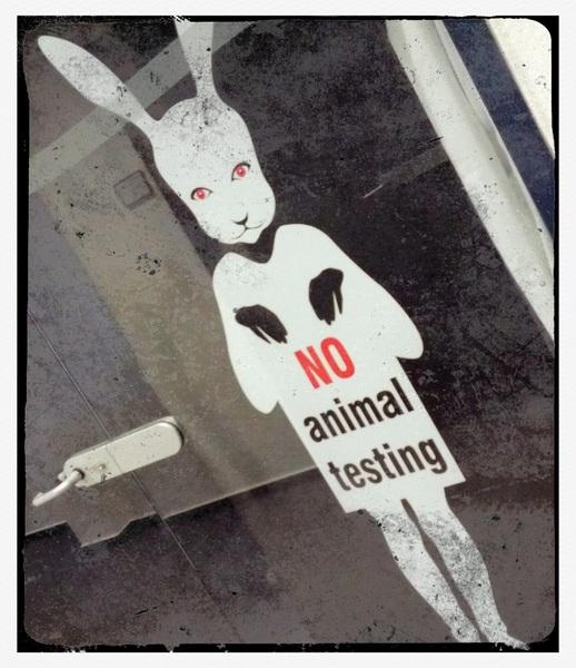 Auch im Bereich IT sind wir strikt gegen Tierversuche.