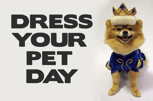 It's National Dress Up Your Pet Day! Post a pic of your pet in the comments!