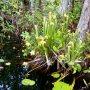 Okefenokee Swamp Park #southgeorgia #okefenokeeswamp #seenature