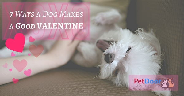 7 Ways a Dog Makes a Good Valentine