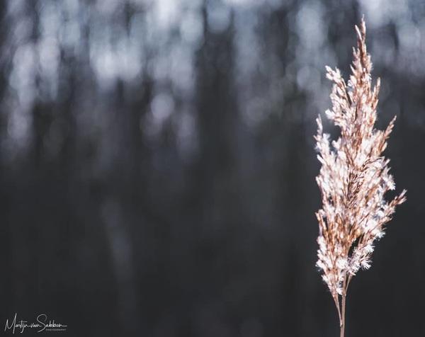Simplicity in nature.  #nikond500 #d500 #natuur #nature #ngc #holland #defotoblogger #macro #ig_nikon #camera_nu #zoomnl #small #simplicity #coolshot #dof #my #nikon #iamnikon #terapel #westerwolde #simple