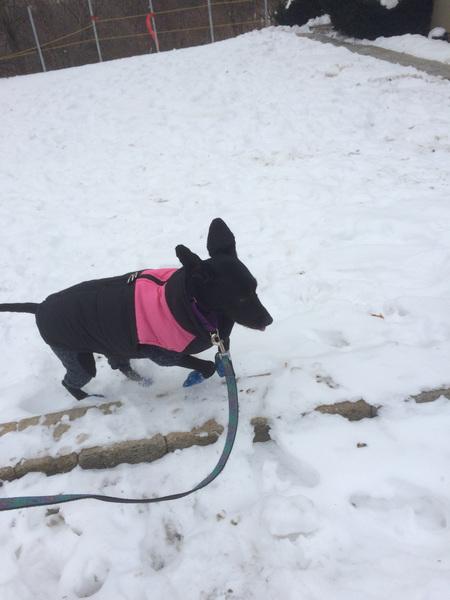 Jett is a bunny :) #winterwalk