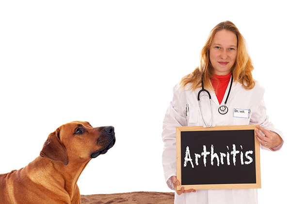 Dog Arthritis – A Quick Introduction