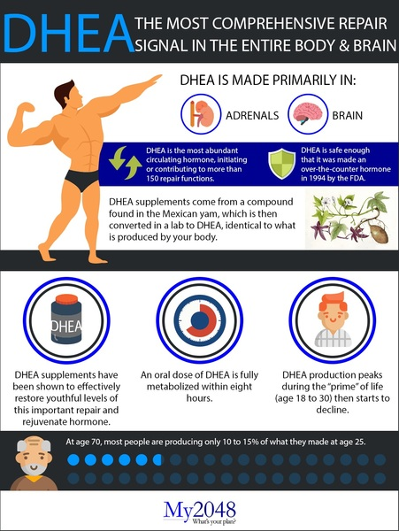 DHEA: The most comprehensive repair signal in the entire body and brain
