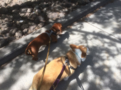 Out enjoying this gorgeous day with a couple gorgeous pups -Cadbury and Edie