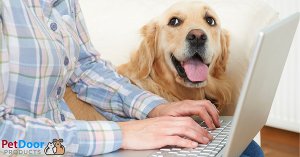 5 Benefits of Dogs in the Workplace