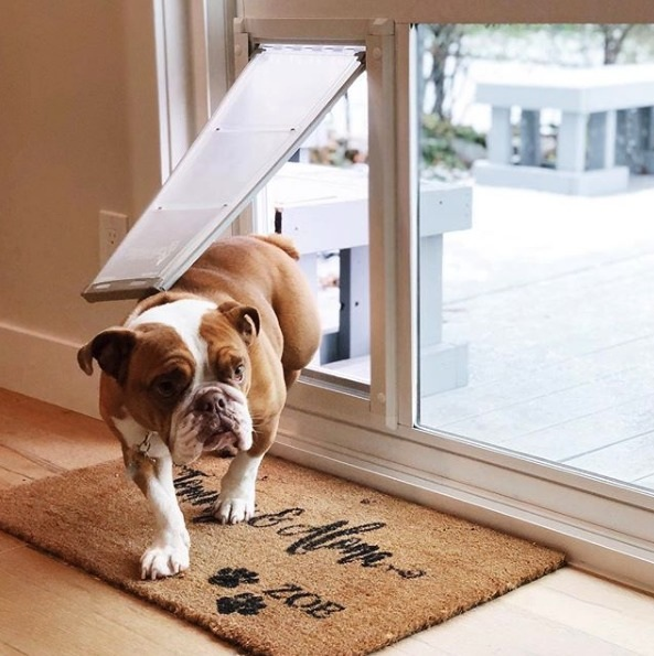 Contact Pet Door Products to see if our pet doors are right for you at (801) 657-4854.  Our customer service team will be happy to answer any questions and provide a Free Price Quote.  http://bit.ly/2HmGreM