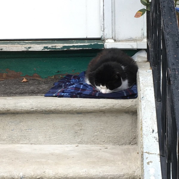 My landlady put out a blanket and food for the neighborhood kitty so now he naps on the door step <3