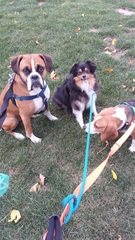 The trio is looking for treats! #cuties #pals