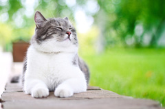 5 Benefits of Feeding Cats a Raw BARF Diet http://bit.ly/2g9DUx2