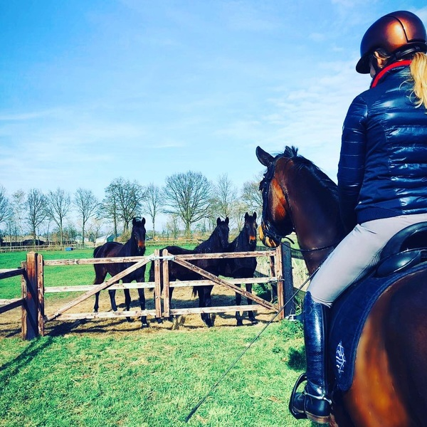 Happy weeekend!🥰💛 #horses #friends #sunny #happy #weekend #saturday #aftertraining #relax #bluesky