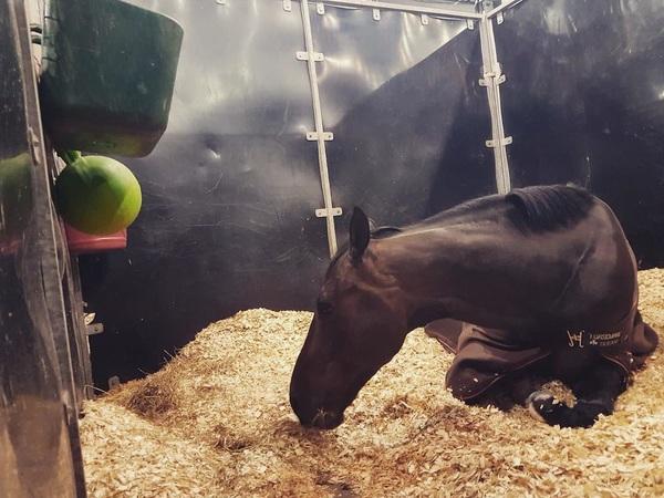 CHILLMODE ON😴  Zephyr rust uit na een goede Grand Prix op @indoorbrabant