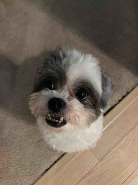 The always smiling Maude, with a cute haircut!