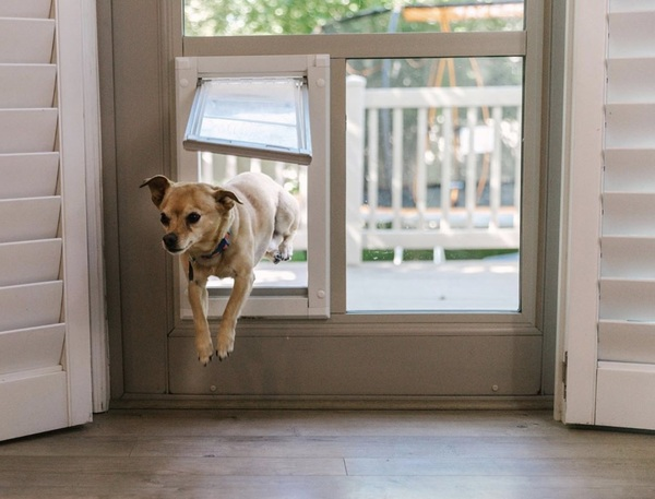 Hoping to tackle the week like Max is tackling his new #Petdoor!!