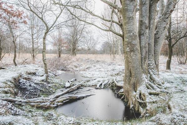 Winter in Nederland, te Ter Borg #winter #Nederland #terborg #westerwolde #nikon #iamnikon #nikond500 #d500 #natuur #nature #ngc #holland #winter #buienradar #sneeuw #koud #cold #frozen #coolshot #nikonnl