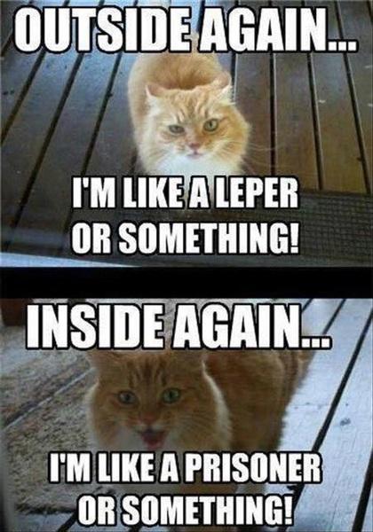 Pet doors aren't just for dogs. Cats love them too. Shop our cat doors online http://bit.ly/2MdBrfN