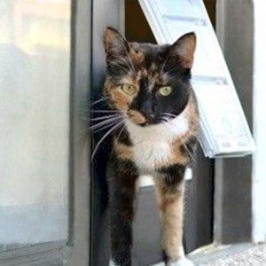 Sliding Glass Cat Door