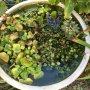 井上家の庭から