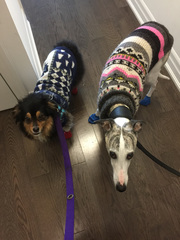 Miles and Arrow are sweater buddies!