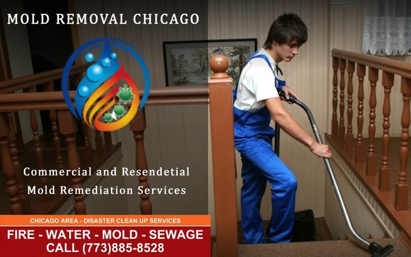 Efficient Mold Removal services in Chicago