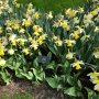 Flowers of the Netherlands #flowers #netherlands #nederland #bloemen #keukenhof #roses #nofilter #narcissus #daffodil #tulip #dutchflowers #holland #нідерланди #квіти #голландія #голландськіквіти #кейкенхоф #троянди #нарцис #тюльпан #безфільтрів