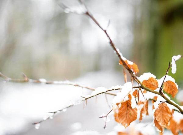 When winter hits nature.. 📸 Nikon D500  #winter #nikond500 #d500 #natuur #nature #ngc #holland #winter #buienradar #sneeuw #koud #cold #frozen #coolshot #nikonnl #tree #trees #ig_discover_nature #ig_nikon #staatsbosbeheer_featureme #staatsbosbeheer #Nederland #orange #season #autumn #nice #small #leaf #leafs