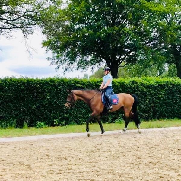 Cooling down na een fijne training met Findsley N.O.P.🌟 Gaan jullie er nog op uit dit weekend?☀️😎 #warm #friday #weekend #training #horse #twohearts #onourwaytotokyo #paraequestrian