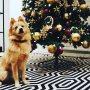 Hoera, hoera, hoera 🎉🎈, happy birthday to Beer 🐾 and merry Christmas for everyone 🌟#beer1jaar #lifeofbeer #kerstkindje🎄 #dogsbirthday #misspublicitynl