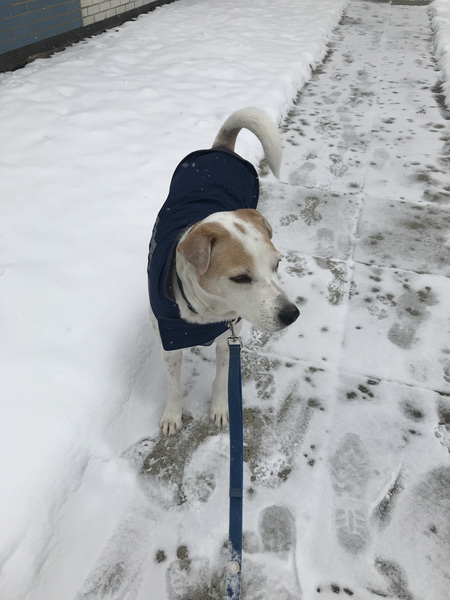 Max is not sure how he feels about the snow today! #snowday