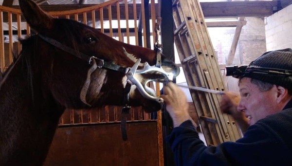 Sajida went to the dentist today! :) #eifelreitcentrum #equinedentist