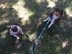 Pacey and Arrow at the park!