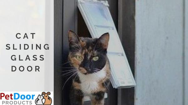 How to Choose the Best Sliding Glass Cat Door