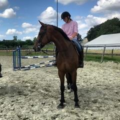 Have Fun!🤗🍀 #mychamp #bigboy #havefun @kwpn_nederland #eventing #riderpro #mountainhorse #shires #equest #teamstubben #trustequestrian #knhstalententeam #bavaria00eventingteam