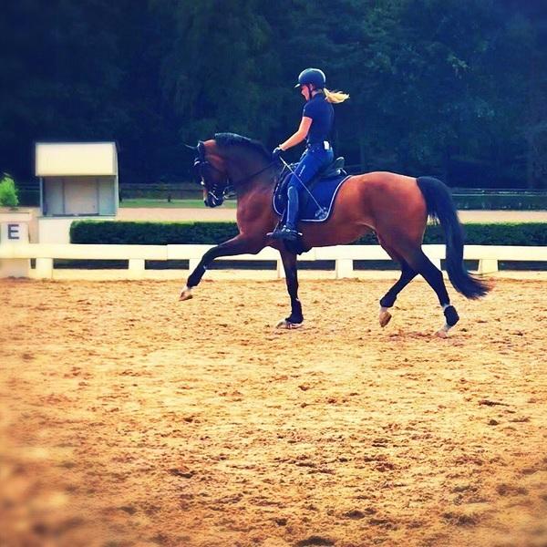 Last teamtraining before @tryon2018! 🔶🇳🇱 At @hippischcentrumdeurne #onourwaytotryon #teamnl #ruiterstinoranje #twohearts #findsley #equestrian #horses #WEG2018 #worldequestriangames