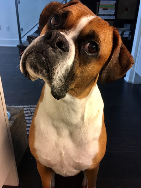 Rocco: did you say treats?