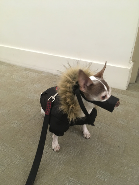 Benson is ready to take on the rain ☔️🌧 #tgif #dogwalking