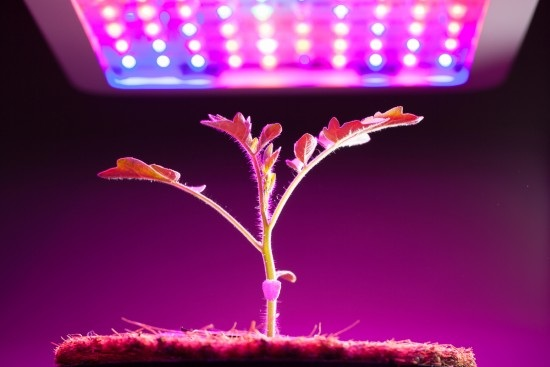 Every little thing You Needed To Have To Find Out About growing Plant Kingdom Under Lights