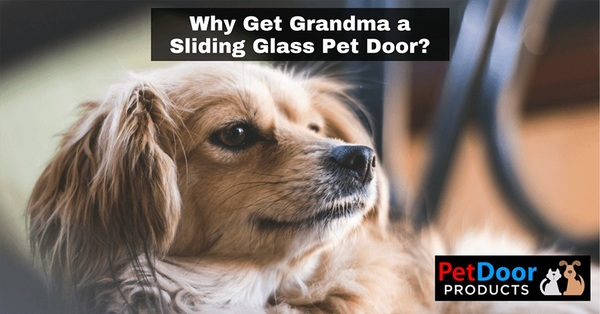 How a Pet Door Helps Senior Citizens