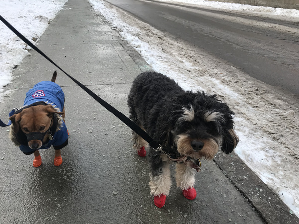 Look at all that salt! Thank goodness for boots! #cutiesinbooties #besties #winterwalks