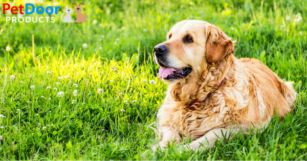 5 Products for Senior Dogs
