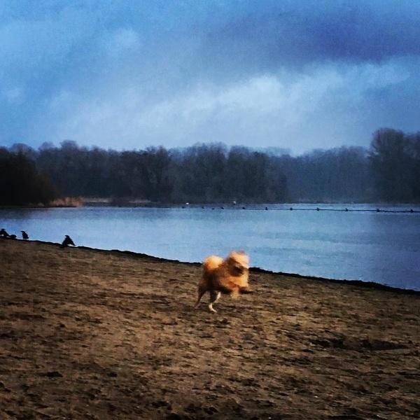 Run Beer run 💪🐾 #lifeofbeer #zondagrundag #favouriteplace #kralingsebos #rotterdam