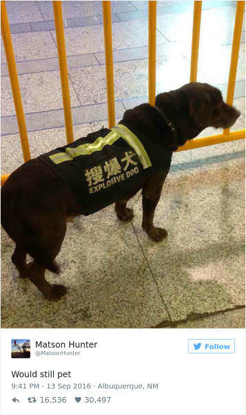 "Who would still pet this ""explosive dog""? http://bit.ly/2qtbjGi"